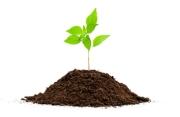 garden_dirt_plant_seed_grow