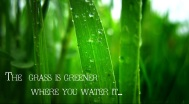 the-grass-is-greener