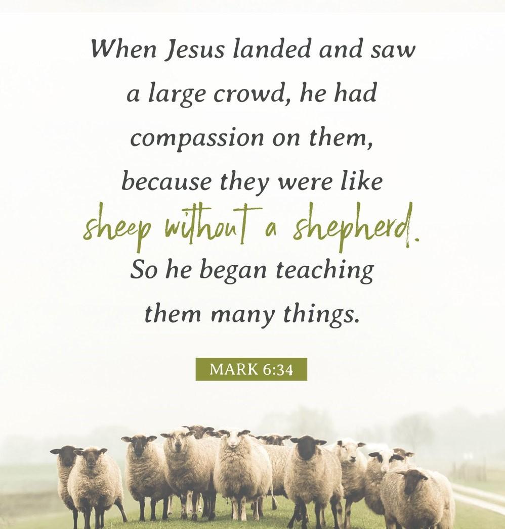 shepherdless sheep